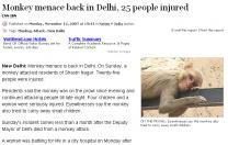 [인도통신]'원숭이 습격'에 인도 사회 '골머리'