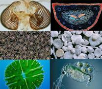 현미경으로 본 '작은 세계'는 어떨까?