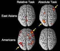 """MIT """"각 문화가 두뇌활동에 영향"""""""