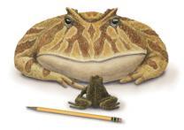 7천만년 전 '악마 두꺼비' 화석 발견