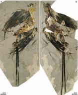 1억 2000만년 넘은 새 화석 中서 발견