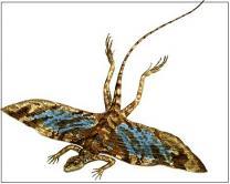 지구 역사상 최초의 새는 '퀴네오사우르스'