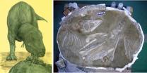 세계최초 어린 '타르보사우르스'화석 발견