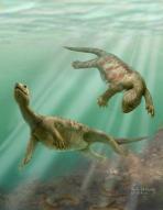 거북 진화 밝혀주는 '2억 2천만년 전' 화석 발견