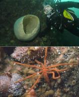 해외연구팀, 남극 생물 1200여종 최초 발견