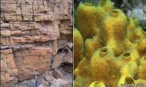지구상 가장 오래된 '생명체의 증거' 발견