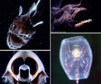 호주 심해1400m에서 발견된 기괴한 생물들