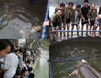 세상에 단 4마리…전설의 '거대 거북' 잡혔다
