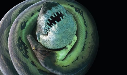 Фотографии змея