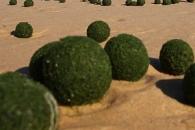 외계인 흔적? 해변에 출몰한 정체불명 '녹색 알' 논란