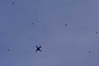 """시리아 상공의 미국 폭격기 B-1B, """"새들 속 있으니 큰 새처럼..."""""""