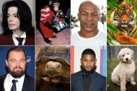 호랑이부터 문어까지…세계적 톱스타들의 애완동물 Top 5