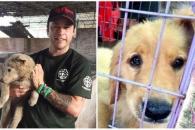 중국 개고기축제서 구조된 개·고양이 수백마리