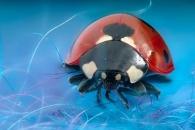 '벌래애오, 예뻐해줘오'…곤충 '소중함' 일깨우는 근접사진