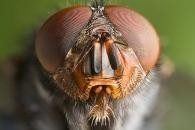 """""""곤충도 자의식 있고 자기중심적 행동 한다"""" (연구)"""