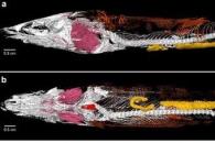 심장까지 완벽히 보존된, 1억2000만년 전 중생대 화석 발견