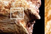 50만년 전 구석기 인류 조상 잡아먹은 그 동물은?
