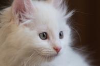 고양이도 물리학의 기초를 이해한다(연구)