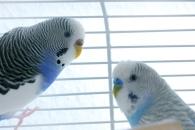앵무새 비행 …느리거나 빠를 뿐, 중간속도는 없다(연구)
