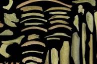 '식인 풍습' 네안데르탈인, 사람 뼈를 도구로 썼다 (연구)