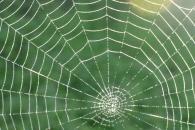 미군, 신형 방탄복 '거미줄 소재 전투복' 개발