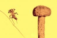 5000만년 전. 극적 탈출에 성공한 곤충 이야기