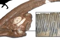 [다이노+] 오리주둥이공룡 번성의 비밀은? 바로 이빨