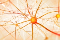 [와우! 과학] 남성 호르몬 유도제는 '젊음의 묘약'…과학적 입증