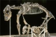 동굴에서 채식만 하다 멸종된 곰이 실재했다(연구)