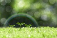 식물, 지구온난화에 맞춰 수분 필요량 줄인다