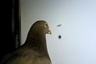 """""""비둘기는 인간의 글자를 구분한다""""(연구)"""