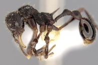 [와우! 과학] 개구리 토사물에서 '신종 개미' 찾았다