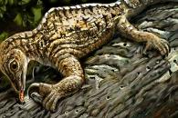 '전갈+개미핥기+카멜레온' 합쳐진 미스터리 고대 파충류
