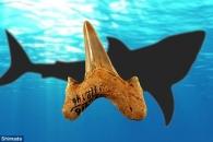 신종 상어 화석, 3개국 동시 발견…메갈로돈 친척