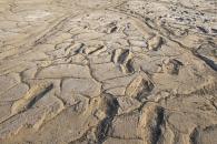 최대 1만9000년 전 호모사피엔스 400여 개 발자국 발견