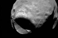 """""""화성의 달 포보스, 250m 천체와 충돌해 움푹 파였다"""""""