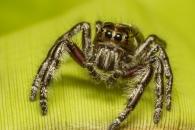 거미의 청력 처음 확인…상상을 초월하는 청력 지녀(연구)