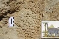 [다이노+] 6600만년 전 티타노사우루스, 진흙에 '피부 자국' 남겼다
