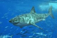 잦은 상어 공격, 결국 인간이 자초한 것…기후변화 등(연구)