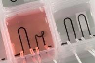 [고든 정의 TECH+] 바이오 3D 프린터, 인간과 동물 살린다