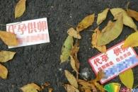 中 여성 난자 거래 성행…1000만원에 팔려