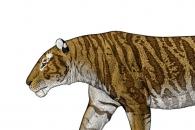 북극곰 만큼 큰…역대 가장 큰 세이버투스 화석 발견