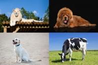 집보다 비싸? 세계서 가장 비싼 애완동물 Top 5