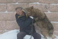 야생늑대 150마리와 동고동락…中 '늑대왕'