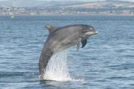 돌고래 위험에 빠뜨리는 '돌고래 먹이주기' (연구)