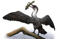 공룡의 시대 하늘을 날던 원시 조류 발견