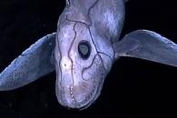 [와우! 과학] 2억 8000만년 전 '키메라 물고기' 화석 발견