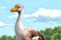 이탈리아 섬 최강 포식자 900만년 전 거위 (연구)