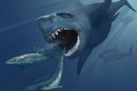 """[와우! 과학] """"거대 상어 메갈로돈 멸종 이유는 먹잇감 감소"""""""