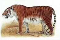 멸종된 초대형 호랑이, 50년 내 '부활'한다